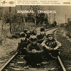 animal-tracks